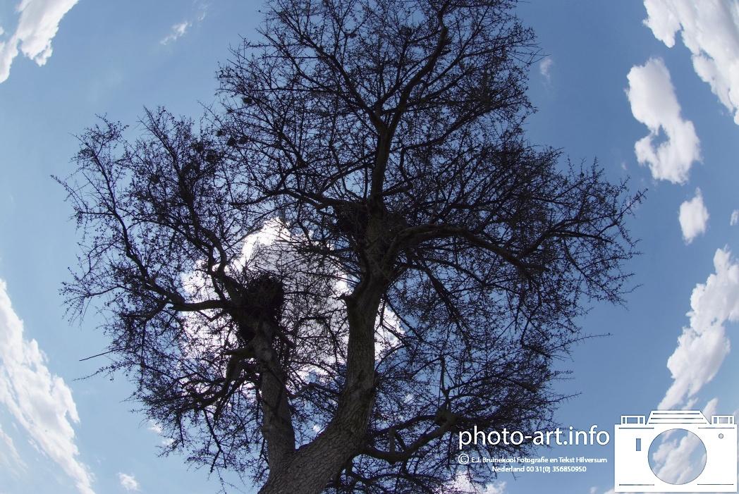 kenya  masaimara  boom met lucht /  tree in the air E.J.Bruinekool Fotografie en Tekst Hilversum  Copyright company name mandatory