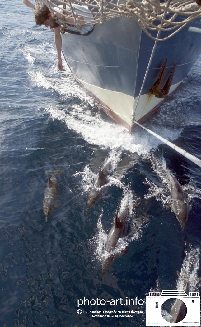 Canarische eilanden atlantische oceaan  catherina dolfijnen rond de boeg van het schip Canary Islands atlantic catharina dolphins around the bow of the shipE.J.Bruinekool Fotografie Hilversum  Copyright naamsvermelding verplicht lid NVJ. V.Kr.Veenlaan 32, 1222lz,  Hilversum, Nederland, tel. 31(0)356850950, fax. 31 356479199  E.J.Bruinekool Fotografie en Tekst Hilversum  Copyright company name mandatory