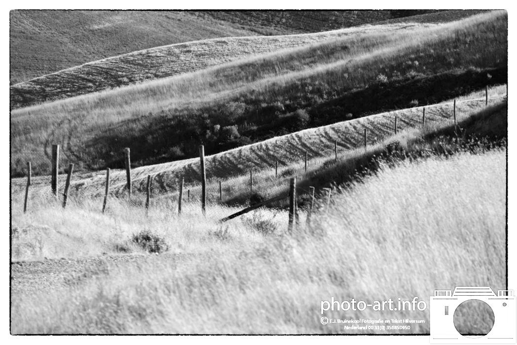 Italie toscaans landschap boeren landbouw zonnebloem olifbomen cipressen druivenE.J.Bruinekool Fotografie Hilversum  Copyright naamsvermelding verplicht lid NVJ. Berlagelaan 62, 1222JZ,  Hilversum, Nederland, tel. 31(0)356850950, fax. 31 356479199
