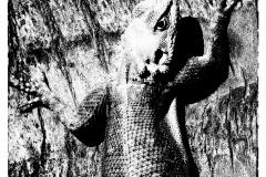 ghambia hagedis boom zonE.J.Bruinekool Fotografie Hilversum  Copyright naamsvermelding verplicht lid NVJ. Berlagelaan 62, 1222JZ,  Hilversum, Nederland, tel. 31(0)356850950, fax. 31 356479199