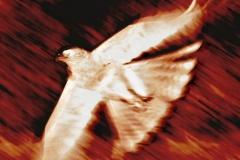 Gambia Kotu  FIRE BIRDE.J.Bruinekool Fotografie Hilversum  Copyright naamsvermelding verplicht lid NVJ. Berlagelaan 62, 1222JZ,  Hilversum, Nederland, tel. 31(0)356850950, fax. 31 356479199